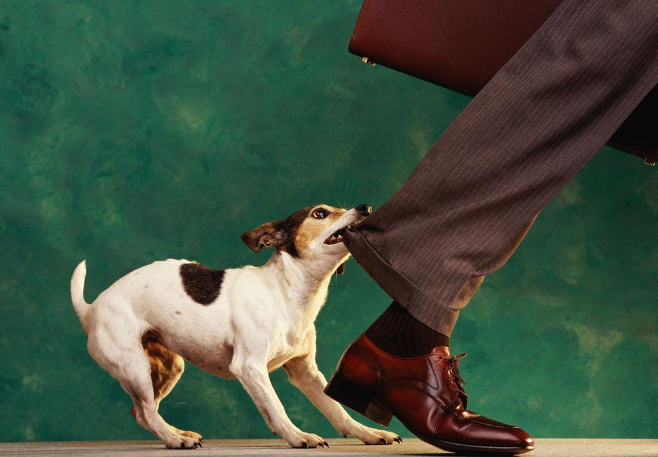 Собака может покусаь даже своего хозяина, если ей дать волю