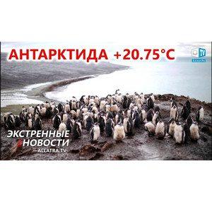 Куда ИСЧЕЗАЕТ вода с поверхности планеты? Аномальное тепло → Антарктида | Нашествие саранчи → Африка