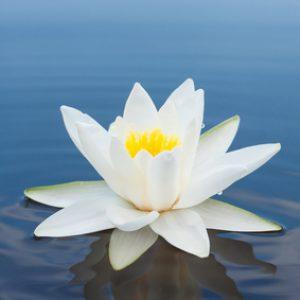 Каково это заниматься духовным саморазвитием по исконным знаниям